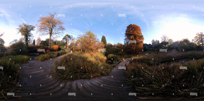 Wakehurst Place - Japanese Iris Garden - Stock Image