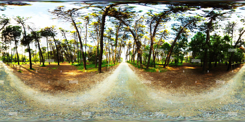 Forrest near the sea in Zadina north of Rimini - Stock Image