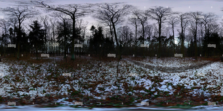 Studanka forrest - Stock Image