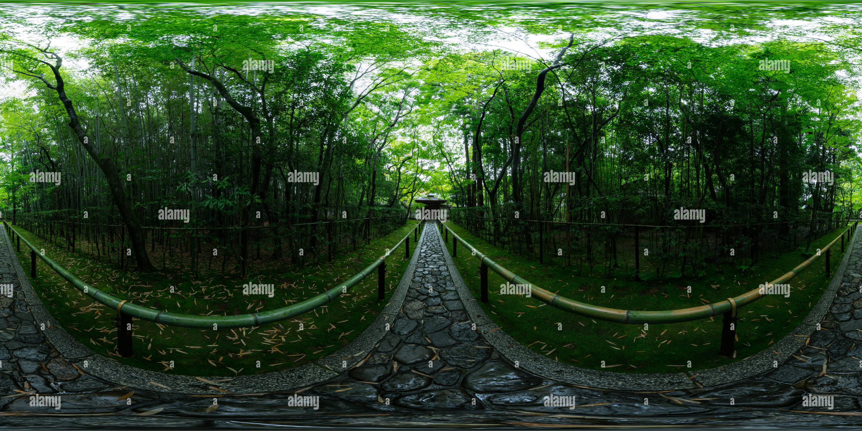 The fresh green of Koto-in temple at Kyoto, Japan 01 - Stock Image