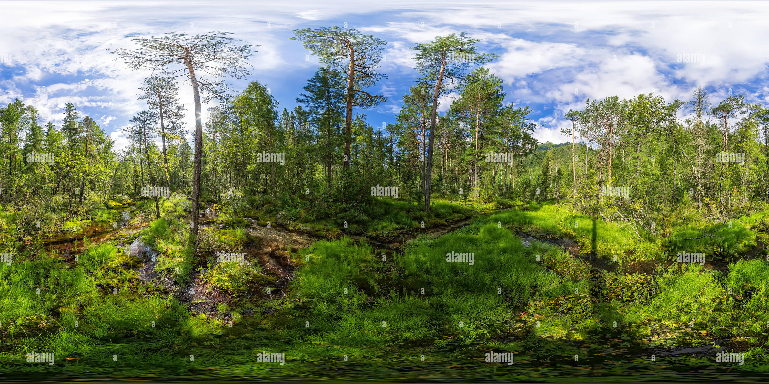 360° View of Stream flows through a thick green forest ...