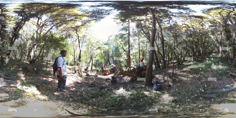 EMUT Pogonip Baumstumpf Entfernen Stockbild