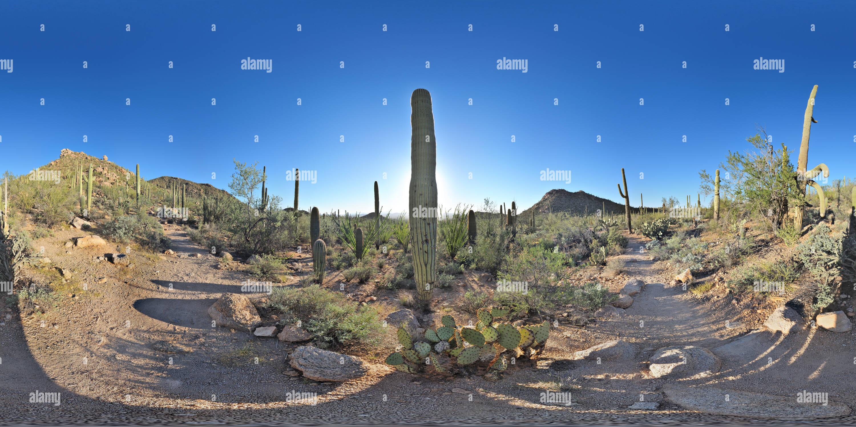 Hugh Norris Trail 01, el Parque Nacional de Saguaro, Arizona, EE.UU. Imagen De Stock
