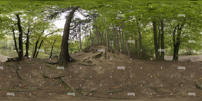 Las raíces del árbol en Hexenteich Imagen De Stock