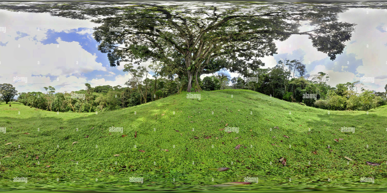 Pie de monte Arbol1 Imagen De Stock