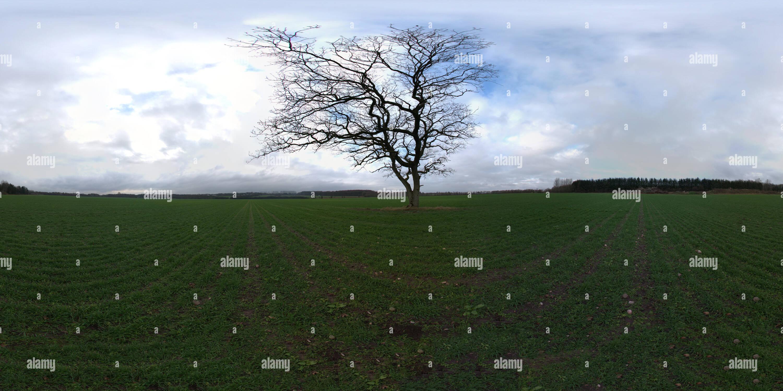El solitario árbol en el campo Imagen De Stock
