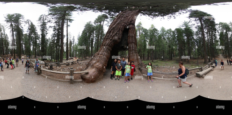 Mariposa Grove 2 Rachels Imagen De Stock
