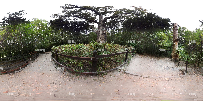 Verano 1100 Oak maxim Zaliznyak Imagen De Stock