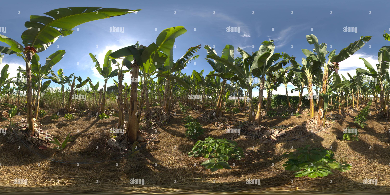 Sistema policultivo irrigado em 1 Imagen De Stock