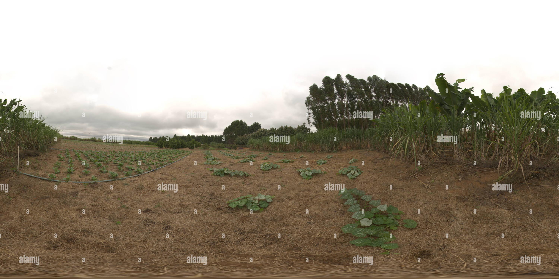 Sistema de plantio direto orgânico em hortaliças irrigado Imagen De Stock