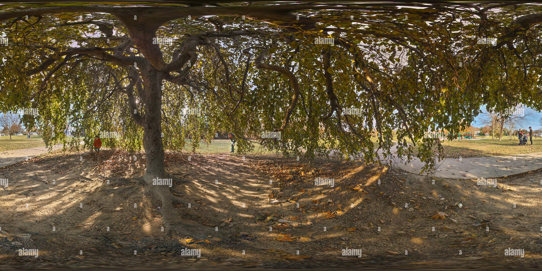 Bajo el árbol Imagen De Stock