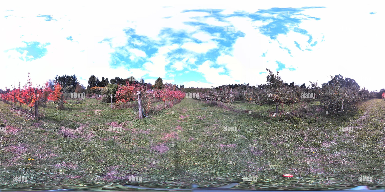 En el huerto Tikitere Imagen De Stock