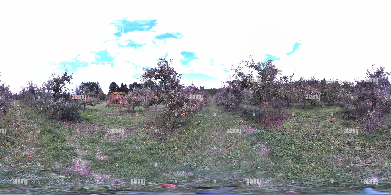 Viejo árbol de apple Orchard Imagen De Stock