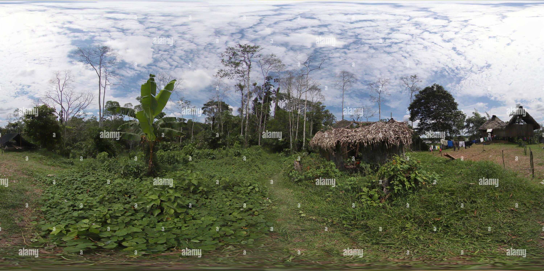 Caminar en la selva Imagen De Stock