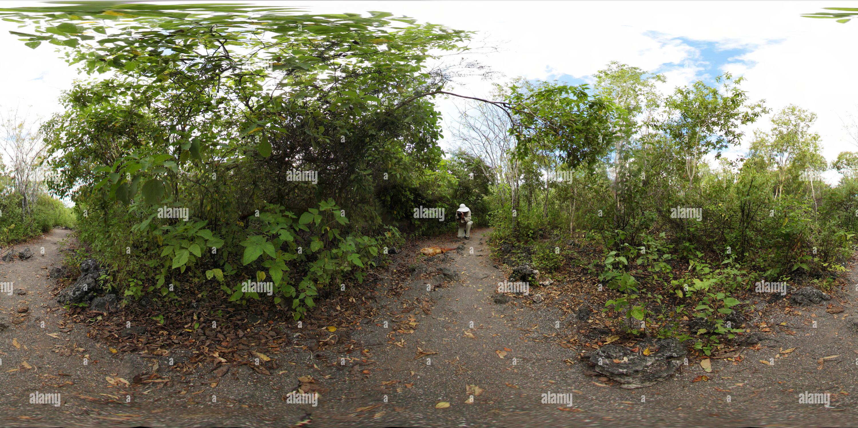Iguana en la isla Isabela Imagen De Stock