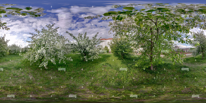 Pommiers à Nijni Tagil Photo Stock