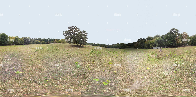 Meadow Photo Stock