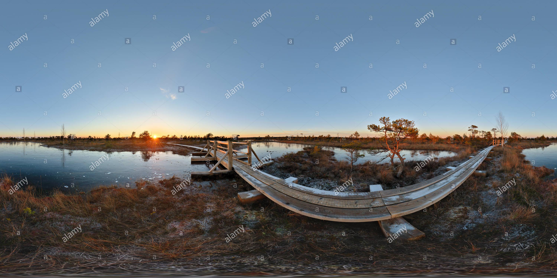 Lielais Ķemeru tīrelis Photo Stock