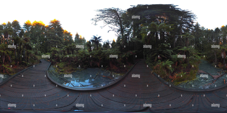 Marais étang redwoods à pied Photo Stock