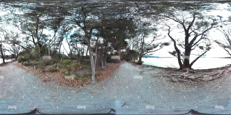 De vieux arbres par le lac Rotorua Photo Stock
