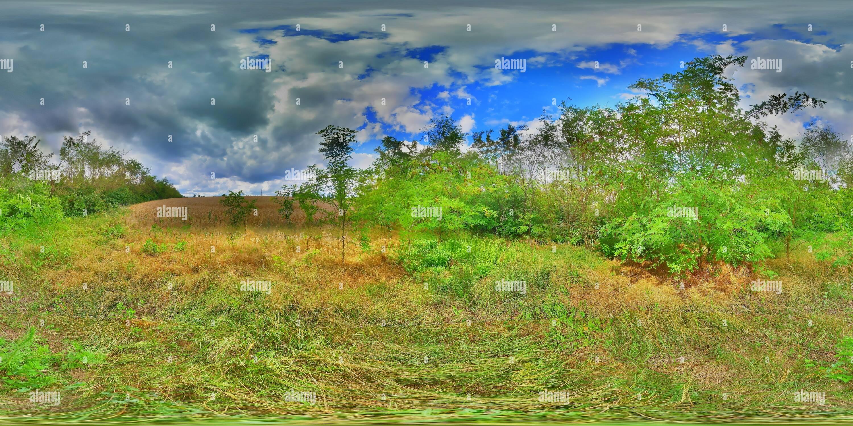 На краю леса. HDR. Photo Stock