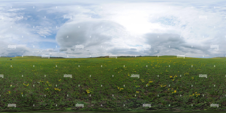 Les fleurs sauvages en Mongolie Photo Stock