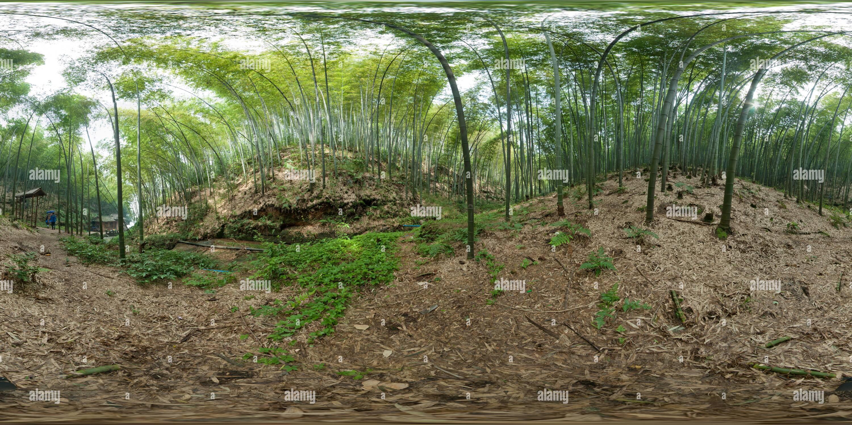 La mer de bambou-2 Photo Stock