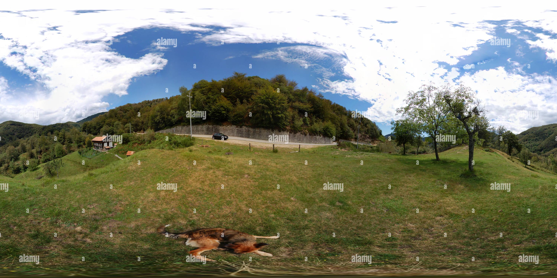 Arola, panorama avec chien Photo Stock