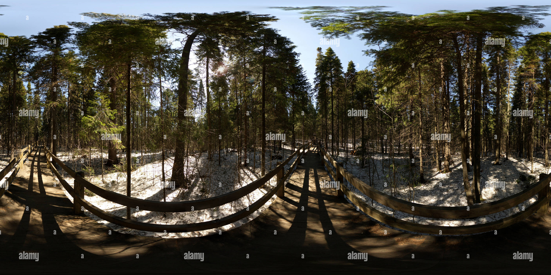 3 тротуар Лесной Photo Stock