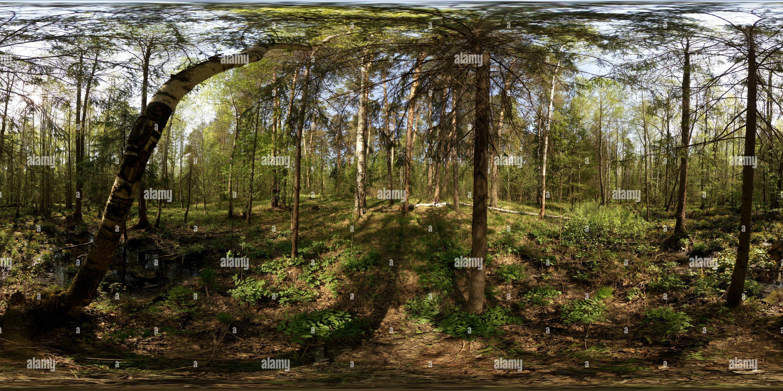 Чугаевском Болото в лесу 2 Photo Stock