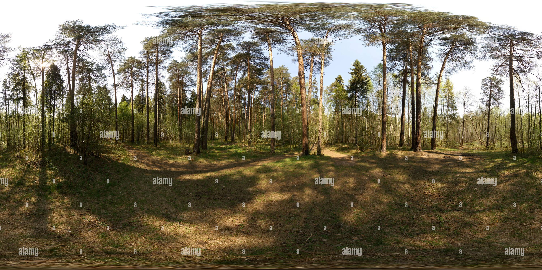 Лесной перекресток возле болота Photo Stock