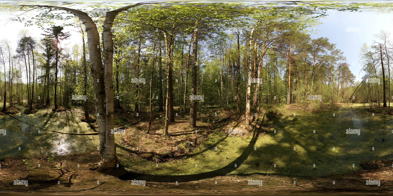 Чугаевском Болото в лесу 3 Photo Stock
