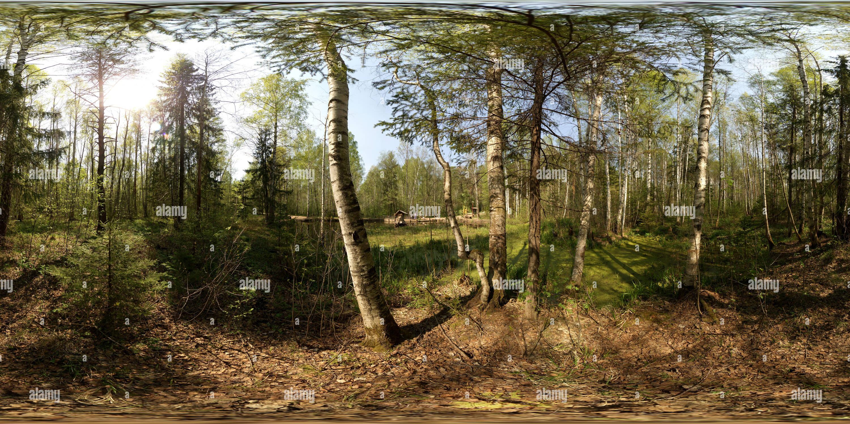 Лесной пруд весной Photo Stock