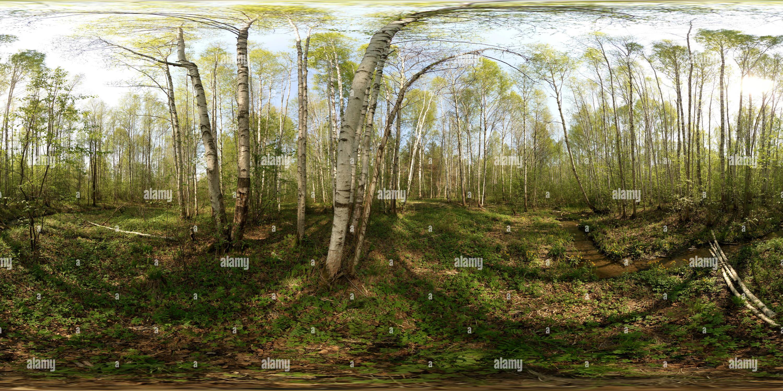 Весеннем Ручей в лесу Photo Stock