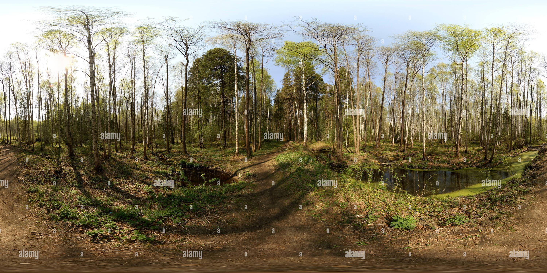 Ручей возле поляны весеннем в лесу Photo Stock