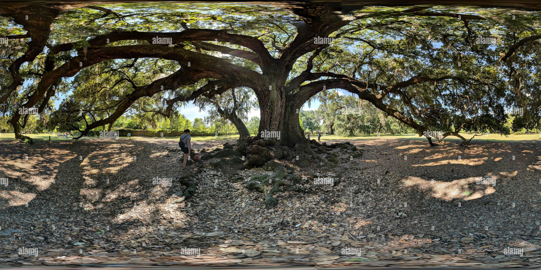 Etienne de chêne alésage alias 'l'arbre de vie', la Nouvelle Orléans, Parc Audobon Photo Stock