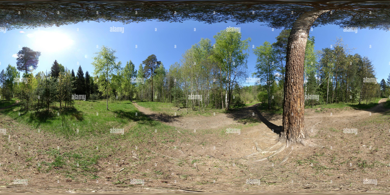 Сосной Под Photo Stock