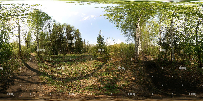 Visualizzazione panoramica a 360 gradi di Березовая аллея через болото 2