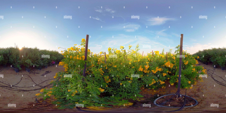 Visualizzazione panoramica a 360 gradi di EXPO2020 vivaio