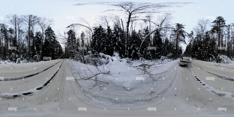 Auto in foresta Immagini Stock